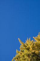 Baum im Herbst, Herbstbaum