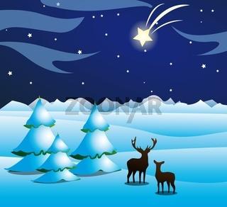 Winternachtstern