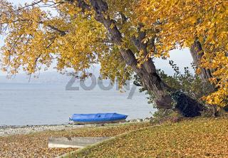 Herbst auf Insel Reichenau Bodensee