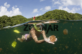 Schwimmen mit harmlosen Quallen, Mastigias papua etpisonii, Swimming with harmless Jellyfishes