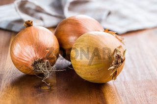 Fresh onion bulbs.