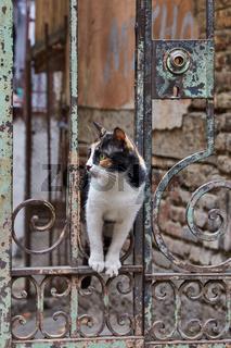 Katze in Tiflis, Georgien