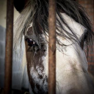 Sad eyes behind bars