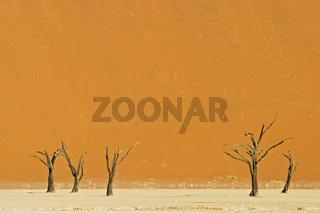 Tote Baeume auf einer ausgetrockneten Lehmpfanne im Deadvlei, Namib Wueste, Namibia, Afrika, dead wood on dried-out clay pan, Namib Desert, Africa