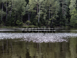 Ruhiges Gewässer, Teich am Waldrand