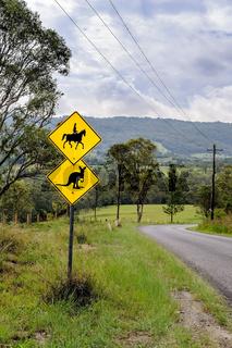 Gefahr auf australischen Straßen: Reiter und Kängurus