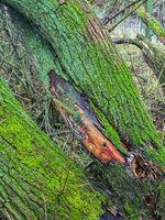 Baumstamm mit Moos bewachsen am Flussufer