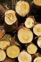 Forstwirtschaft - Holzstapel