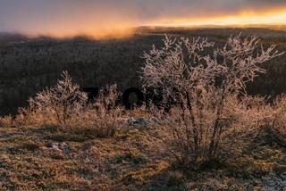 abendliche Lichtstimmung, Muddus, Lappland