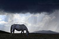 Schimmel bei nahendem Unwetter am Songköl-See (Son Kul, Song Kol), Kirgisistan