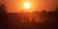 Elefanten kommen bei Sonnenuntergang zur Tränke
