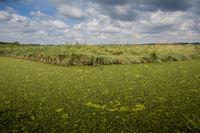 Algae Covered River