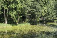 See mit Seerosen und einem Haus im Hintergrund