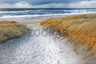 Weg durch die Dünen, bei Kampen, Sylt, Schleswig-Holstein, Deutschland