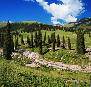 Summer mountain valley