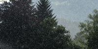 Sommerregen im Gegenlicht vor Nadelbäumen