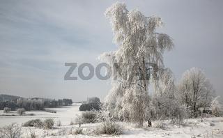 Winter im Naturschutzgebiet