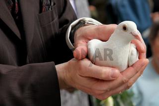 Bräutigam mit Taube