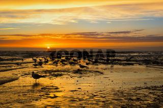 Möwen im Sonnenuntergang - Texel Paal 17