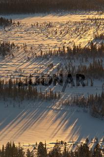 Baeume mit Schattenwurf, Sjaunja Naturreservat, Welterbe Laponia, Lappland, Schweden