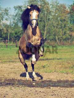 jumping pony under puddle