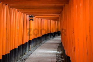 Red Torii of Fushimi Inari Shrine, Kyoto, Japan