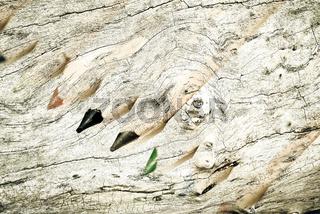 Buntstifte mit Holz Textur