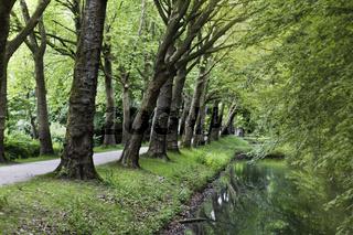 Alleenweg beim Wasserschloss Senden, Münsterland, NRW