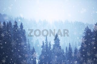 Nadelbäume im Winter mit Schneefall