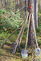 Shovel and an ax leaning against a pine tree