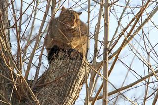 Wildkatze versteckt auf einem Baum