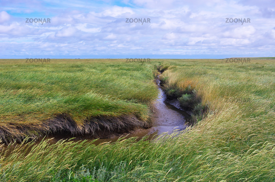 Landschaftsimpression Westerhever