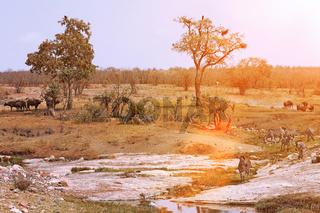 Landschaft im Kruger Nationalpark Südafrika; landscape at Kruger NP, South Africa