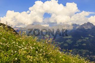 Blumenwiese in Südtirol, Italien, flower meadow in south tyrol, italy