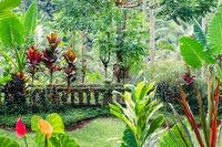 Fantasy tropical plants  in mossy garden