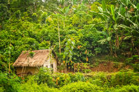 Wooden bamboo hut in the jungle
