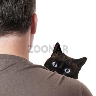 cat peeking over shoulder