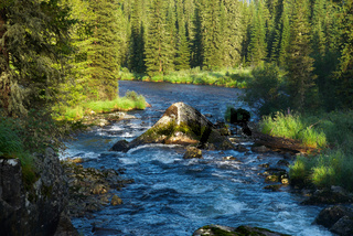 Mountain river and forest