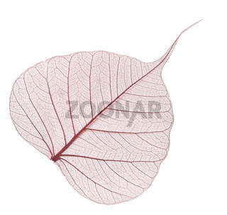 brown leaf isolated on white background
