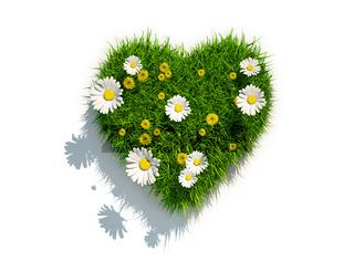 Valentine grass heart on white background