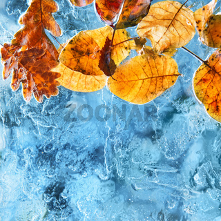 Orange and red leaves in blue ice