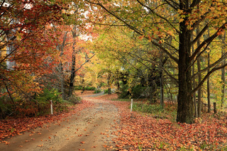 Country road meandering through trees with autumn foliage