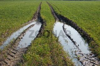 Bodenverdichtung durch Traktorspur