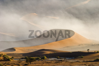 Duenen im Nebel, Sossusvlei, Namib Wueste, Namibia, Afrika, dunes in fog, Namib Desert, Africa