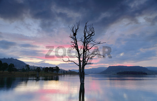 Cool hues over the lake with large tree and nest