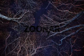 Forest, cozy fire and blue night sky