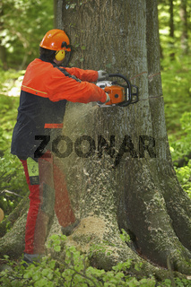 Forstarbeiter faellt einen Baum im Wald