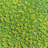 Textur - Wandbepflanzung grün mit gelben Blüten