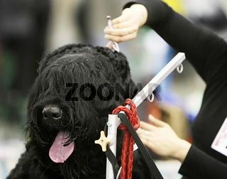 Dog at  a barbershop
