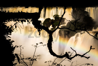 Branch silhouette at Iguazu Falls, Argentina